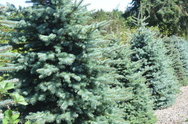Christmas Wreath Fundraising, Door Swags, Noble Fir Wreaths and More